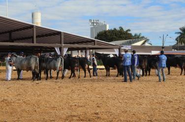 Megaleite 2017 reflete fortalecimento da pecuária leiteira e confirma mais uma edição em Belo Horizonte